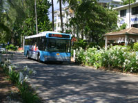 Palm Cove Bus Service